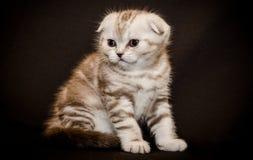 En katt Royaltyfria Bilder