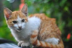 En katt Arkivfoto