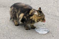 En katt dricker Royaltyfri Bild