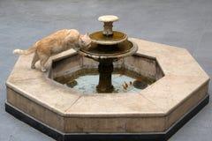 En katt dricker vatten fr?n en springbrunn arkivbilder