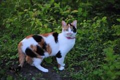 En katt förvånades mellan växterna Arkivfoto