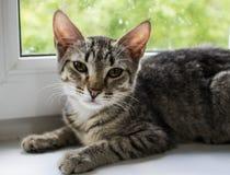En katt från ett skydd väntar på dess ägare arkivbild
