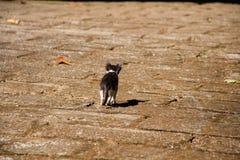 En katt går royaltyfria foton
