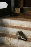 En katt gör sig ren framme av ingången av en tempel (Bhutan) royaltyfri bild