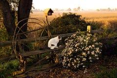 En katt granskar höstträdgården Royaltyfria Bilder