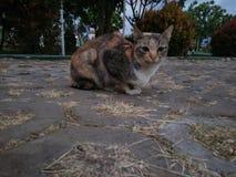 En katt i eftermiddagen royaltyfri foto