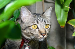 En katt i en Bush Royaltyfri Bild