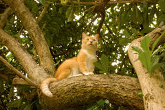 En katt i ett boleyträd Arkivfoton