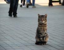 En katt in i gatan för ‹för †för stads Royaltyfria Foton