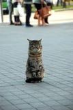En katt in i gatan för ‹för †för stads Fotografering för Bildbyråer
