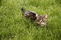 En katt i gräset Royaltyfri Fotografi