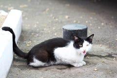 En katt i Odessa Ukraine Royaltyfri Bild