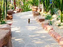En katt inom tropiskt utställningväxthus Arkivfoto