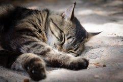 En katt ligger sovande Arkivbild