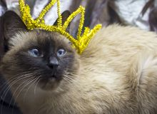 En katt med en krona på hans huvud royaltyfri bild