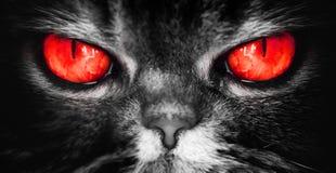 En katt med röd jäkel synar, en ond ruskig framsida från en mardröm, blickar direkt in i andan, kamera arkivfoto