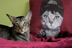 En katt och drottningen Royaltyfri Bild