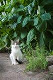 En katt på en bakgrund av exotiska blommor Royaltyfria Bilder