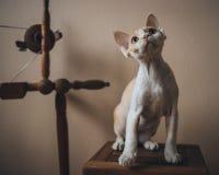 En katt på ett utomhus- affärsföretag Royaltyfri Foto