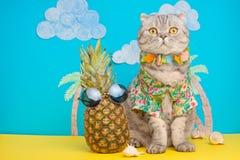 En katt på ferie i en hawaiansk skjorta med ananors På stranden med malma Ett begrepp av vilar, avkoppling, semester fotografering för bildbyråer