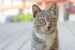 En katt på gatan Arkivfoton