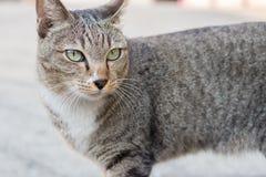 En katt på gatan Arkivbilder