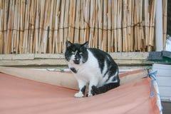 En katt på invallningen Arkivbild