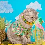 En katt på semester i en hawaiansk skjorta med ananors och solexponeringsglas och en coctail som dricker från ett sugrör På stran fotografering för bildbyråer