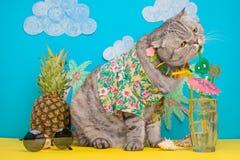 En katt på semester i en hawaiansk skjorta med ananors och solexponeringsglas och en coctail som dricker från ett sugrör På stran royaltyfri fotografi
