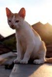 En katt på taköverkanten Royaltyfri Foto