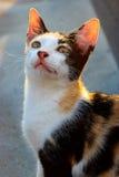 En katt på taköverkanten Arkivfoton