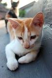 En katt på taköverkanten Fotografering för Bildbyråer