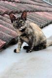 En katt på taköverkanten Royaltyfria Bilder