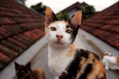 En katt på taköverkanten Arkivfoto