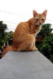 En katt på taköverkanten Royaltyfri Bild