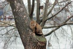 En katt på trädet arkivfoto