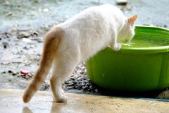 En katt som dricker från en vattenbunke arkivbild
