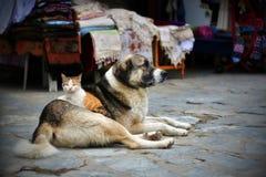 En katt som ligger på en hund Foto av ett bra kamratskap Arkivbild