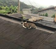En katt som ligger på hustaket Royaltyfri Bild