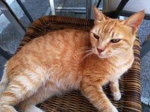 En katt som ligger på en vide- stol Fotografering för Bildbyråer