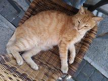 En katt som ligger på en vide- stol Arkivbilder