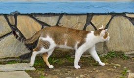 En katt som spelar på det lantliga huset royaltyfria bilder