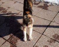 En katt som visar oss all hennes skönhet och ger oss möjlighet att fly Royaltyfri Fotografi