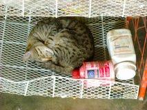En katt sover fotografering för bildbyråer