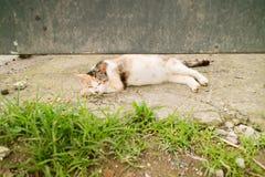 En katt tar en ta sig en tupplur Arkivfoton