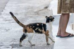 En katt tigger en kvinna Royaltyfria Foton