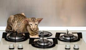 En katt väntar på matställen arkivbild