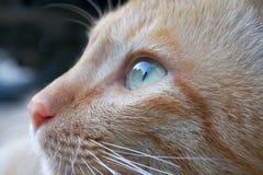 En kattframsida Royaltyfri Fotografi
