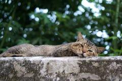 En kattsömn på den gamla väggen arkivbild