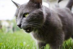 En kattstående Royaltyfri Foto